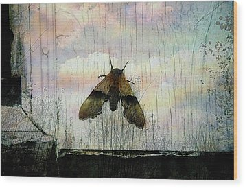 Just Arrived Wood Print by Shirley Sirois