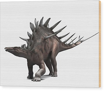 Kentrosaurus Dinosaur, Artwork Wood Print by Sciepro