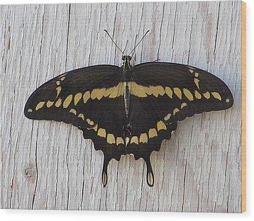Kewl Moth Wood Print