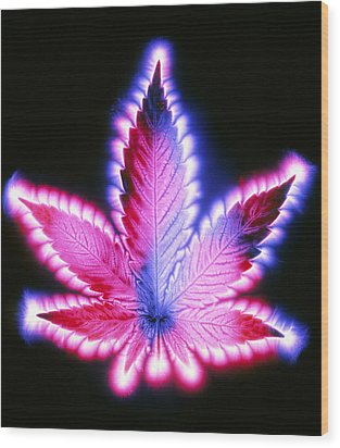 Kirlian Photograph Of A Leaf Of Cannabis Sativa Wood Print by Garion Hutchings