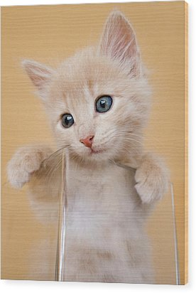 Kitten In Glass Vase Wood Print by Sanna Pudas