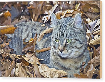 Wood Print featuring the photograph Kitten In Leaves by Susan Leggett