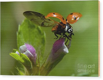 Lady Bird Take Off Wood Print