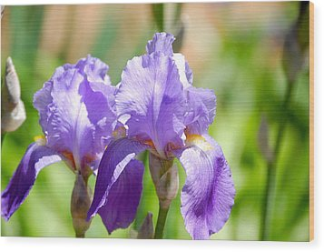 Lavender Iris I Wood Print