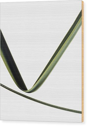 Leaves Wood Print by Gavin Kingcome