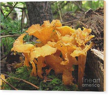 Lesser Chanterelle Wood Print