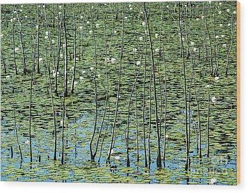 Lilly Pond Wood Print by John Greim