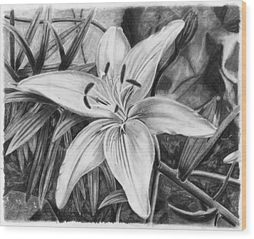 Lily Wood Print by Susan Schmitz