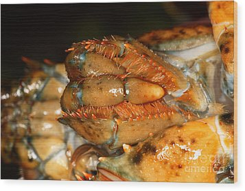 Lobster Mouth Wood Print by Ted Kinsman