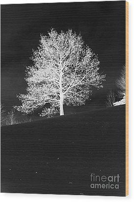 Lone Tree Wood Print by David Bearden