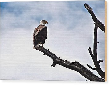 Lonely Sentenel Wood Print by Don Mann