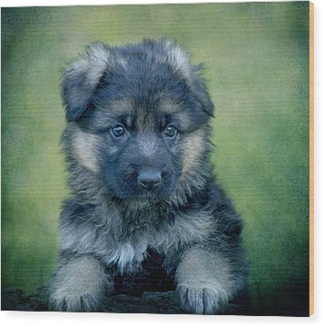 Long Coated Puppy Wood Print by Sandy Keeton