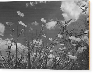 Looking Up  Wood Print by Betsy Knapp
