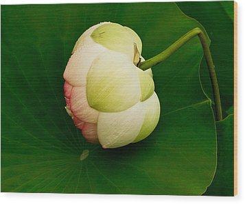 Lotus Wood Print by Jean Noren