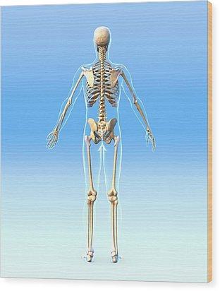 Male Skeleton, Artwork Wood Print by Roger Harris