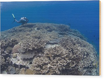 Masses Of Staghorn Coral, Papua New Wood Print by Steve Jones