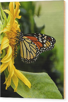 Monarch And The Sunflower Wood Print