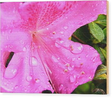 Wood Print featuring the photograph Morning Dew by Brian Wright