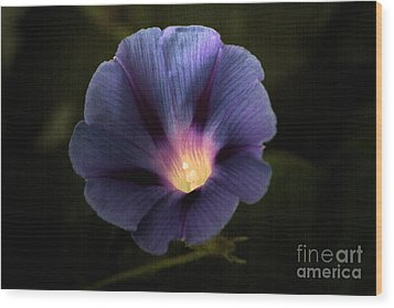 Morning Glory  Wood Print by Marjorie Imbeau