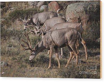 Mule Deer Bucks Wood Print