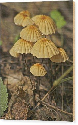 Mushrooms Wood Print by Michael Peychich