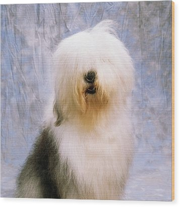 Old English Sheepdog Wood Print by The Irish Image Collection