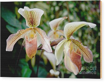 Orchids Wood Print by Yurix Sardinelly