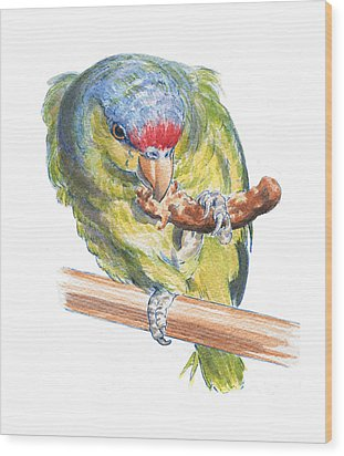 Parrot Eating Toast Wood Print by Maureen Carter