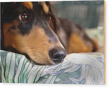 Patient Dachshund  Wood Print by Carmen Del Valle