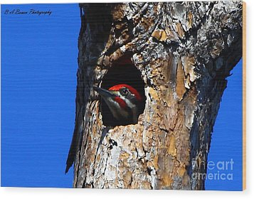 Peeking Out Wood Print by Barbara Bowen