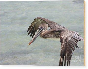 Pelican Wood Print by Sophie Vigneault