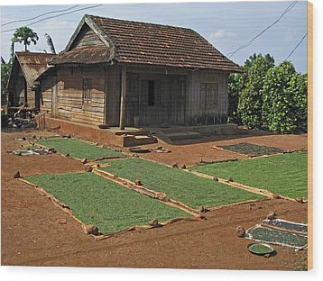 Pepper Cultivation, Vietnam Wood Print by Bjorn Svensson