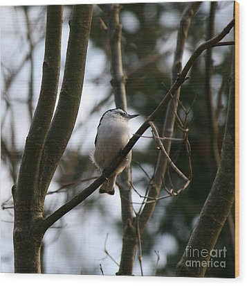 Perched And Content  Wood Print by Neal Eslinger