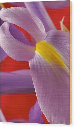 Photograph Of A Dutch Iris Wood Print by Perla Copernik