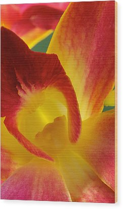 Photograph Of A Hope Orchid Flower Wood Print by Perla Copernik