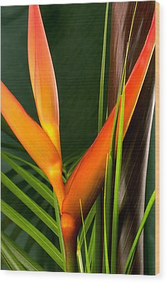 Photograph Of A Parrot Flower Heliconia Wood Print by Perla Copernik