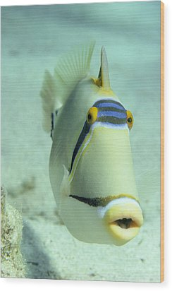 Picasso Triggerfish Wood Print by Georgette Douwma