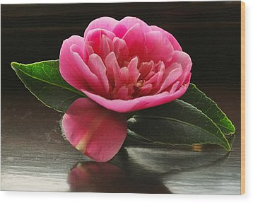 Pink Camellia Wood Print by Terence Davis