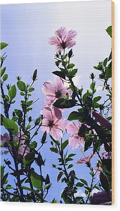 Pink Hibiscus Wood Print by Kevin Smith