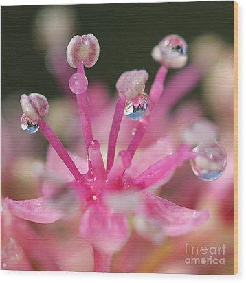 Pink Magic Wood Print by Karin Ubeleis-Jones