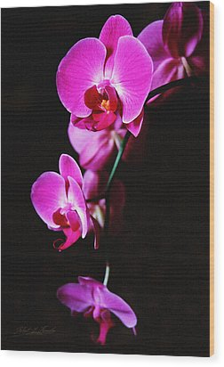 Wood Print featuring the photograph Pink Orchid Trio by Robert Kernodle