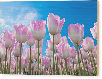 Wood Print featuring the photograph Pink Tulips by Hans Engbers