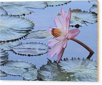 Pink Water Lily Wood Print by Sabrina L Ryan