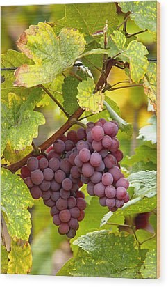 Pinot Noir Grapes Wood Print by Jeremy Walker