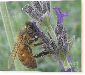 Pollen Catcher Wood Print