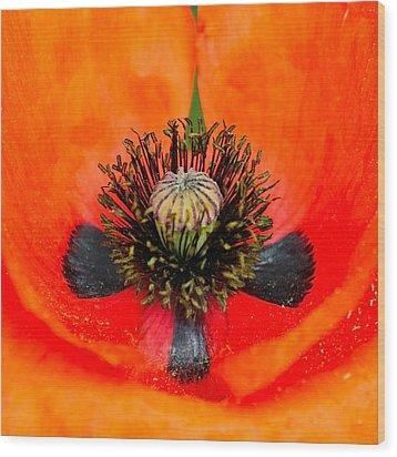 Poppy Heart Wood Print by Karon Melillo DeVega
