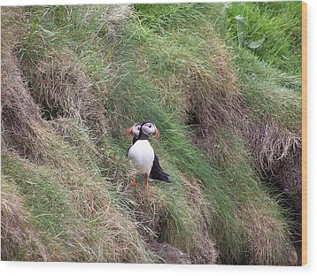 Puffins Wood Print by George Leask