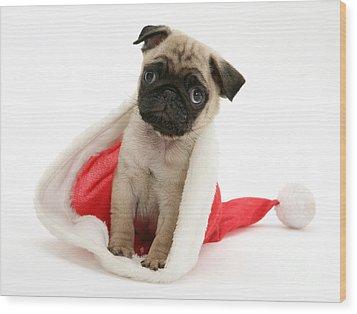 Pug Puppy Wood Print by Jane Burton