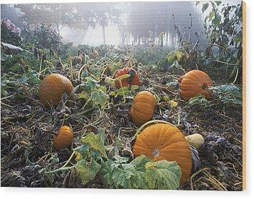 Pumpkin Patch, British Columbia Wood Print by David Nunuk