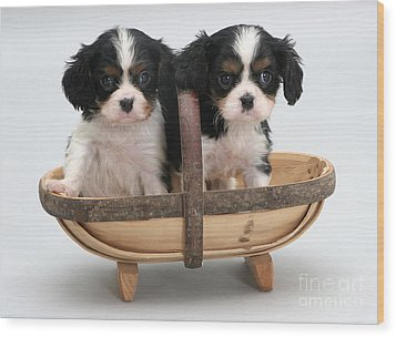 Puppies In A Trug Wood Print by Jane Burton
